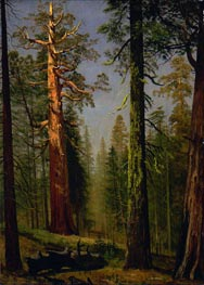 The Grizzly Giant Sequoia, Mariposa Grove, California, c.1872/73 by Bierstadt | Painting Reproduction