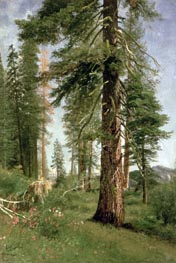 California Redwoods, undated by Bierstadt | Painting Reproduction