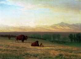 Buffalo on the Plains, c.1890 by Bierstadt | Painting Reproduction