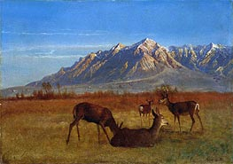 Deer in Mountain Home | Bierstadt | Painting Reproduction