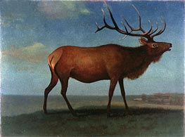 Bull Elk, indated by Bierstadt | Painting Reproduction