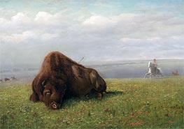 Büffeljagd, undated von Bierstadt | Gemälde-Reproduktion