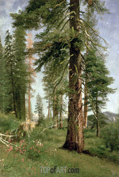 California Redwoods, undated | Bierstadt| Gemälde Reproduktion