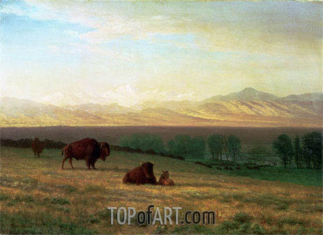 Buffalo on the Plains, c.1890 | Bierstadt | Gemälde Reproduktion