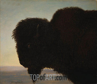 Buffalo Head, c.1879 | Bierstadt| Painting Reproduction