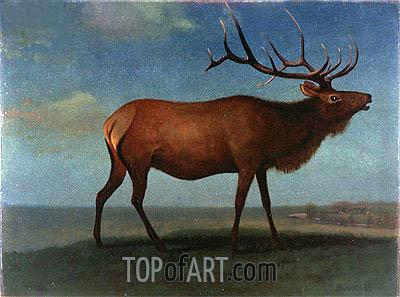 Bierstadt | Bull Elk, indated