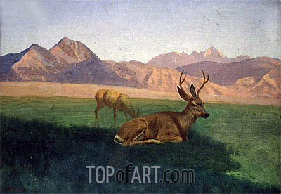 Deer, indated | Bierstadt | Painting Reproduction