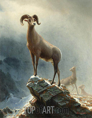 Rocky Mountain, Big Horn Sheep, c.1882/38 | Bierstadt | Painting Reproduction