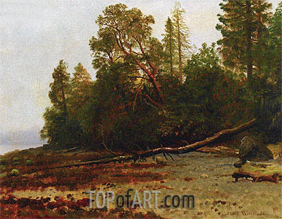 The Fallen Tree, undated | Bierstadt | Painting Reproduction