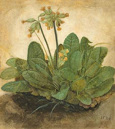 Tuft of Cowslips, 1526 by Durer | Painting Reproduction
