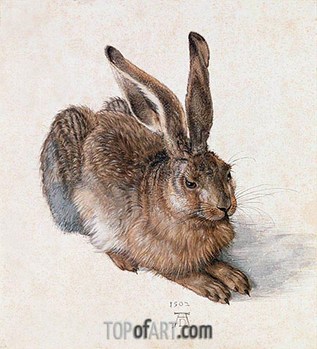 Hare, 1502 | Durer | Painting Reproduction