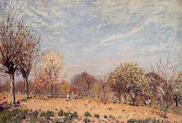 Apple Trees in Flower, Spring Morning, 1873 by Alfred Sisley | Painting Reproduction