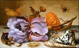 Still Life Depicting Flowers, Shells and Insects, undated by van der Ast | Painting Reproduction