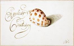 A Shell: Phalium Aureola, c.1660 by van der Ast | Painting Reproduction