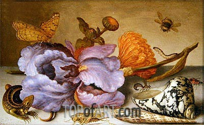 Still Life Depicting Flowers, Shells and Insects, undated | van der Ast| Painting Reproduction