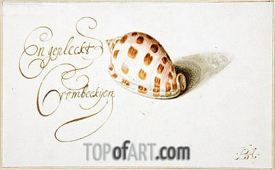 A Shell: Phalium Aureola, c.1660 | van der Ast| Painting Reproduction