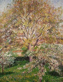 The Walnut and Apple Trees in Bloom at Eragny, 1895 by Pissarro | Painting Reproduction