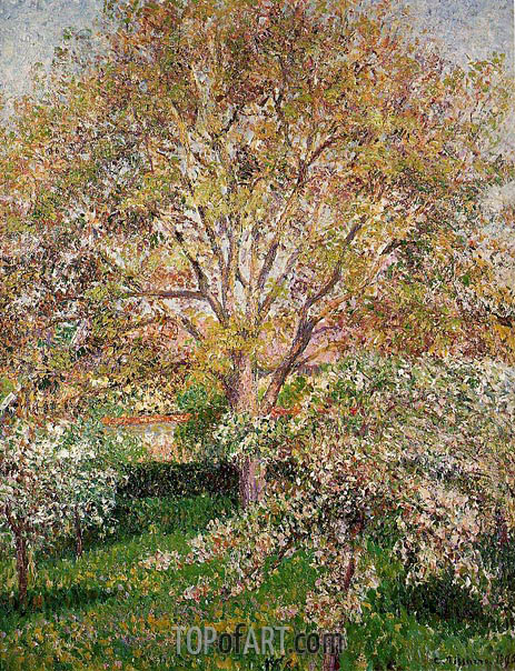The Walnut and Apple Trees in Bloom at Eragny, 1895 | Pissarro | Painting Reproduction