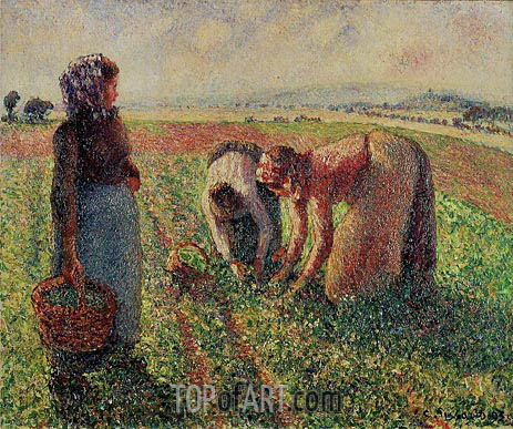 Picking Peas, 1893 | Pissarro | Painting Reproduction