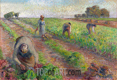 The Beet Harvest, 1881 | Pissarro| Painting Reproduction