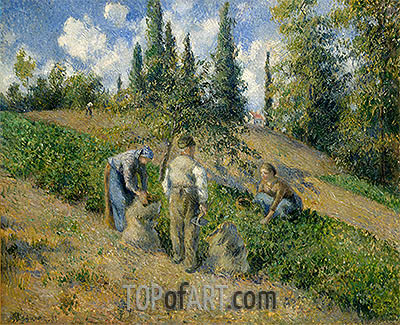 The Harvest, Pontoise, 1881 | Pissarro| Painting Reproduction