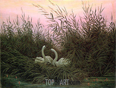 Swans in the Reeds, c.1820 | Caspar David Friedrich | Painting Reproduction