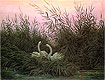 Swans in the Reeds | Caspar David Friedrich