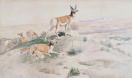 Antelope, 1894 by Charles Marion Russell | Painting Reproduction