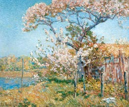 Apple Trees in Bloom, Old Lyme, 1904 von Hassam | Gemälde-Reproduktion