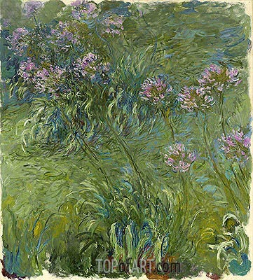 Agapanthus, c.1914/26 | Monet| Painting Reproduction