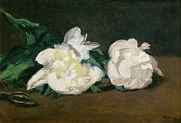 Branch of White Peonies and Secateurs | Manet | veraltet