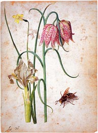 Narcissus, Iris, Fritillaria and Hornet, undated by Georg Flegel | Painting Reproduction