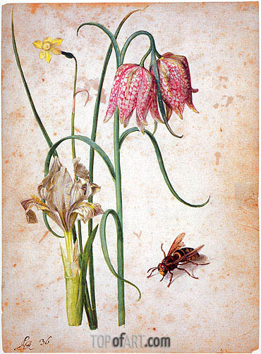 Narcissus, Iris, Fritillaria and Hornet, undated | Georg Flegel | Gemälde Reproduktion