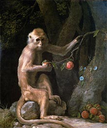 Portrait of a Monkey, 1774 by George Stubbs | Painting Reproduction