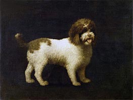 A Water Spaniel, 1769 by George Stubbs | Painting Reproduction