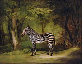 A Zebra, 1763 by George Stubbs | Painting Reproduction