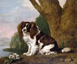 Fanny, a Brown and White Spaniel, 1778 by George Stubbs | Painting Reproduction