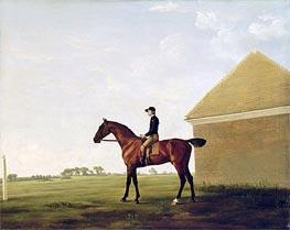 Turf, c.1765 von George Stubbs | Gemälde-Reproduktion