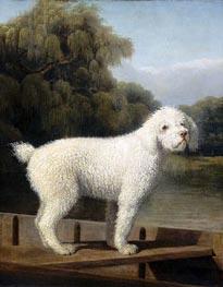 Weißer Pudel, c.1780 von George Stubbs | Gemälde-Reproduktion