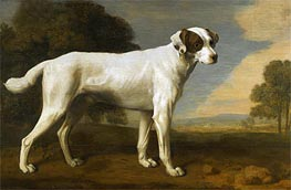Viscount Gormanston den weißen Hund, 1781 von George Stubbs | Gemälde-Reproduktion