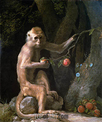 Portrait of a Monkey, 1774 | George Stubbs| Painting Reproduction