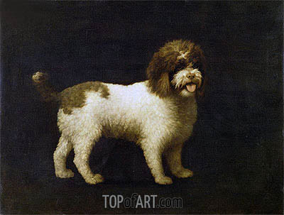 A Water Spaniel, 1769 | George Stubbs | Painting Reproduction