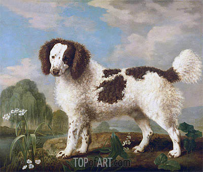 Brown and White Norfolk or Water Spaniel, 1778 | George Stubbs | Painting Reproduction
