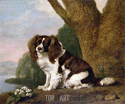 Fanny, a Brown and White Spaniel, 1778 | George Stubbs | Painting Reproduction