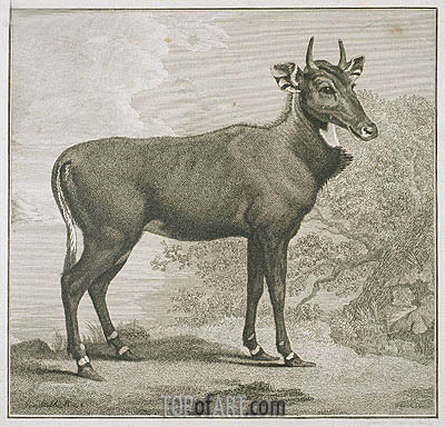 Plate of the Nyl-Ghan, undated | George Stubbs | Painting Reproduction