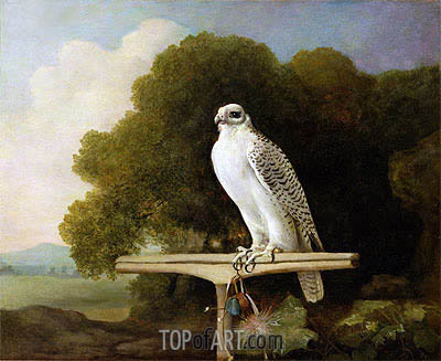 Greenland Falcon (Grey Falcon), 1780 | George Stubbs| Painting Reproduction