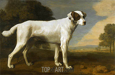 George Stubbs | Viscount Gormanston's White Dog, 1781