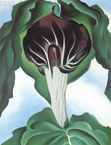 O'Keeffe | Jack in the Pulpit III, 1930