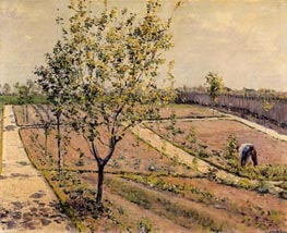 Kitchen Garden, Petit Gennevilliers, 1882 by Caillebotte | Painting Reproduction