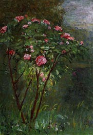 Rose Bush in Flower, 1884 by Caillebotte | Painting Reproduction